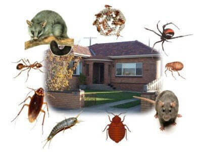 cartoon with pests outside house